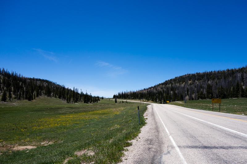 Alpine meadows near Cedar Breaks