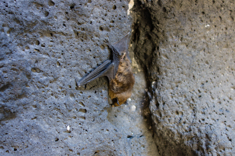 The only bat we saw